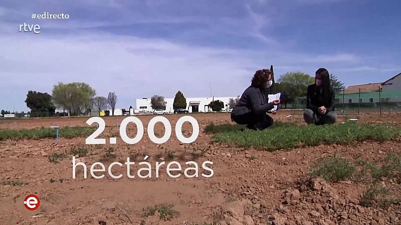 España Directo - 14/04/21 - ver ahora
