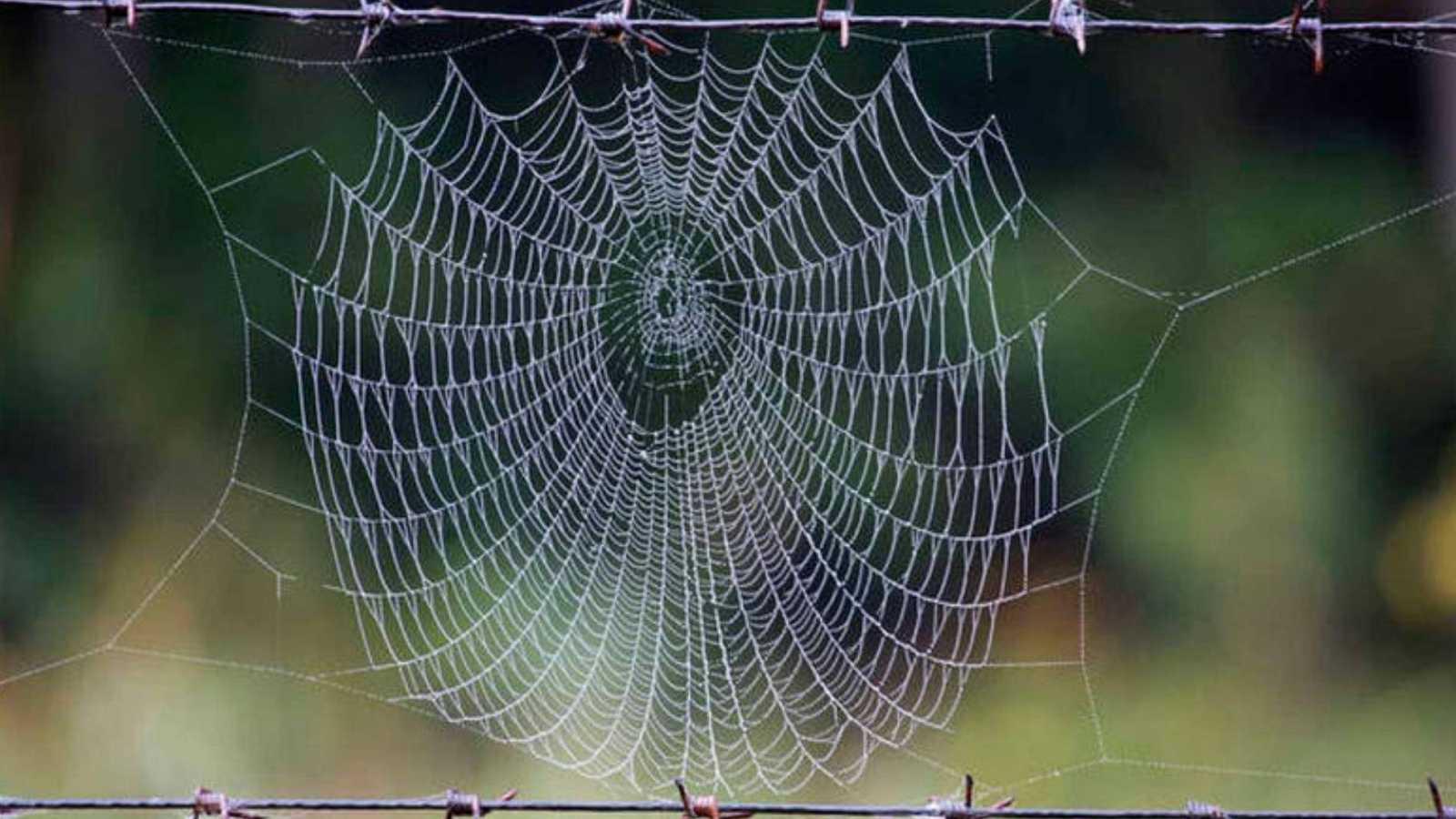 Científicos del MIT traducen en música la estructura de una telaraña
