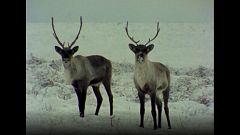El hombre y la tierra (Serie canadiense) - Invierno en Canadá