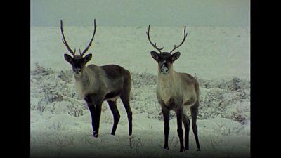 El hombre y la tierra (Serie canadiense) - Invierno en Canadá - ver ahora