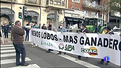 Los ganaderos de Zamora protestan por la protección del lobo