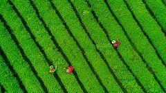 Viaje a las plantaciones de té de la región china de Guizhou
