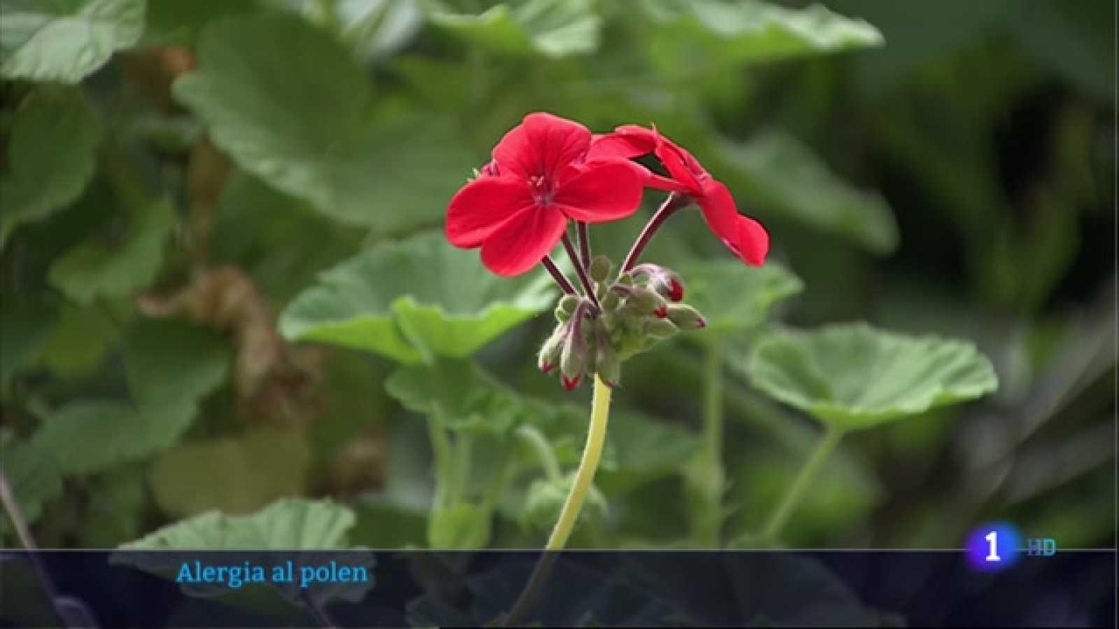 Extremadura, la mayor concentración de polen esta primavera - 19/04/2021