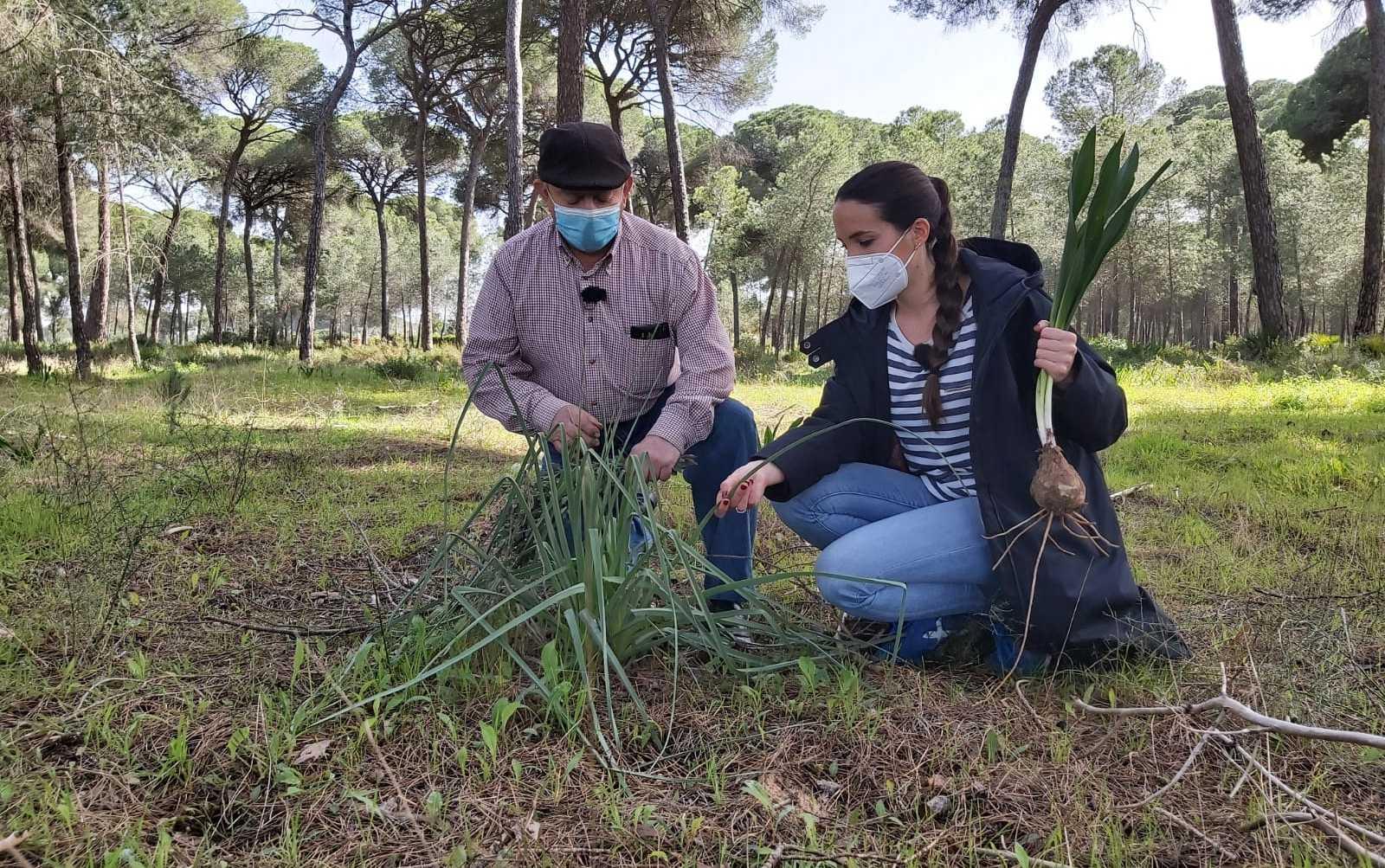 Aquí la Tierra - Botiquín de plantas medicinales: una farmacia de 24 horas