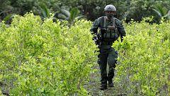 Colombia volverá a fumigar con avionetas las plantaciones de coca