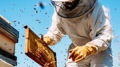 Aquí la Tierra - Los apicultores nos enseñan cómo consiguen miel de las abejas