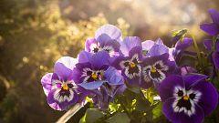 Aquí la Tierra - Nuestro hortelano de guardia reflexiona sobre las flores