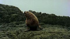 El hombre y la Tierra (Serie canadiense) - Gran fauna canadiense II