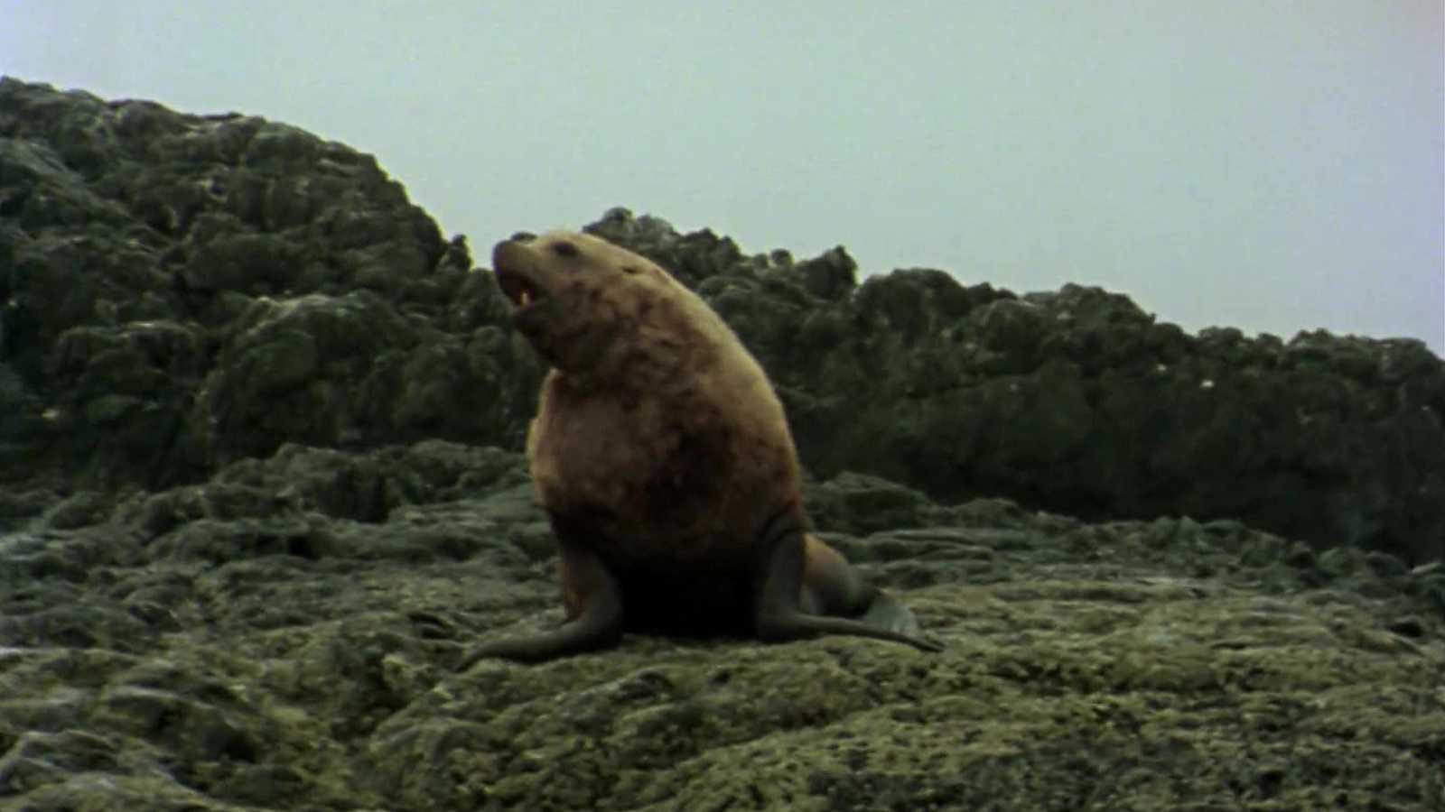 El hombre y la Tierra (Serie canadiense) - Gran fauna canadiense II - ver ahora
