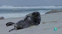 Grans Documentals - Un any de natura al Canadà - Hivern