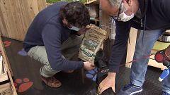 La pandemia impulsa el negocio de las mascotas con una facturación anual de 2.000 millones de euros en España