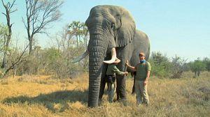 África, el show de los elefantes