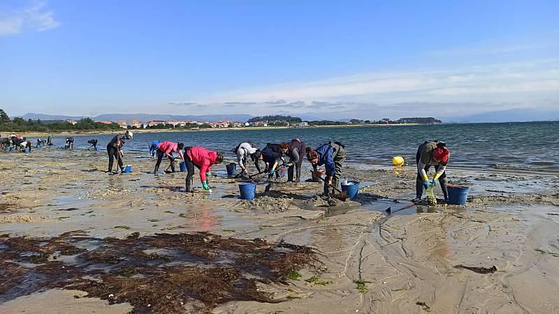 España Directo - Las mariscadoras recogen las mascarillas que 'inundan' la Ría de Arousa