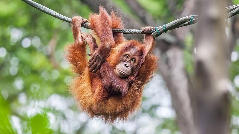 Aquí la Tierra - Iturriaga visita Rainfer, centro de acogida de primates