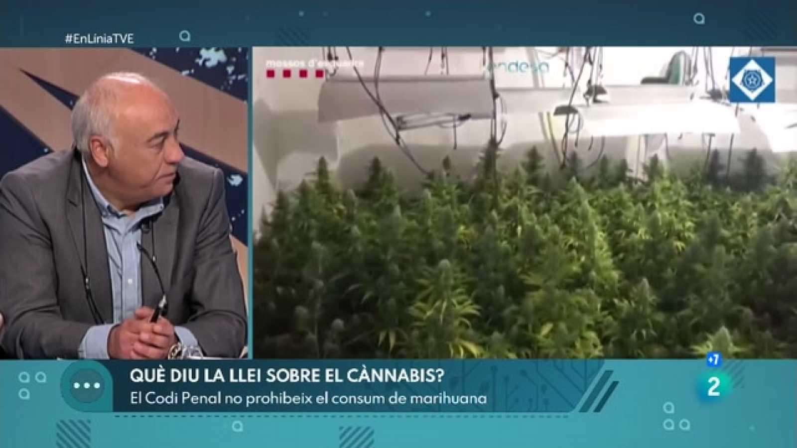 A En Línia parlem de Catalunya, el planter de marihuana d'Europa