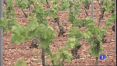 UPA pide ayudas urgentes para el sector del vino