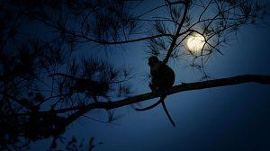 Las selvas de la luna. Manglares