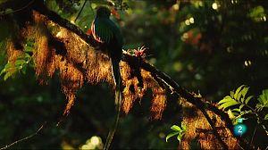 Els ritmes de la vida: Coralls i quetzals