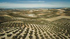 España Directo - El olivar de Jaén, ¿Patrimonio de la Humanidad?