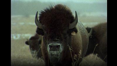 El hombre y la tierra (Serie canadiense) - Aventura en Canadá - ver ahora