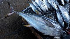 España Directo - Primer día de pesca en la Almadraba de Barbate