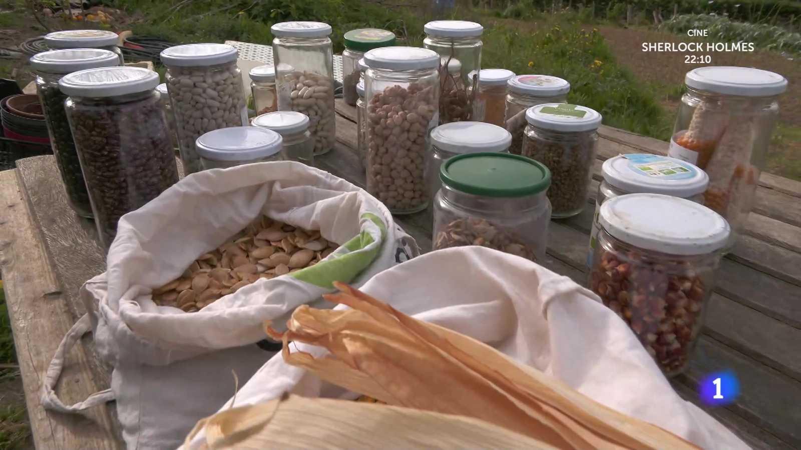 Aquí la Tierra - ¿Para qué sirve un banco de semillas?