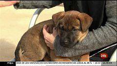"""Parlamento - El reportaje - """"Proyecto Escan"""": perros contra la violencia de género - 01/05/2021"""