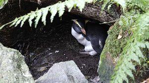 El reino de los pingüinos
