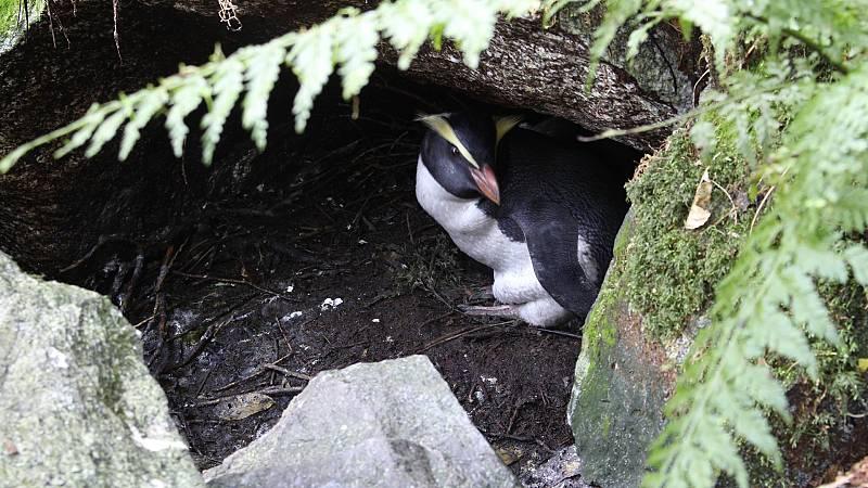 Somos documentales - El reino de los pingüinos - ver ahora