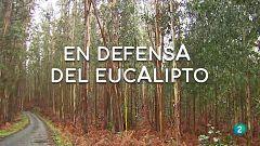 La aventura del saber -  En defensa del eucalipto