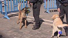 Unidad canina de Policía Municipal de Pamplona