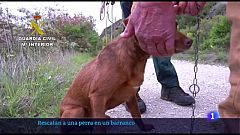 Rescate perro por Guardia Civil