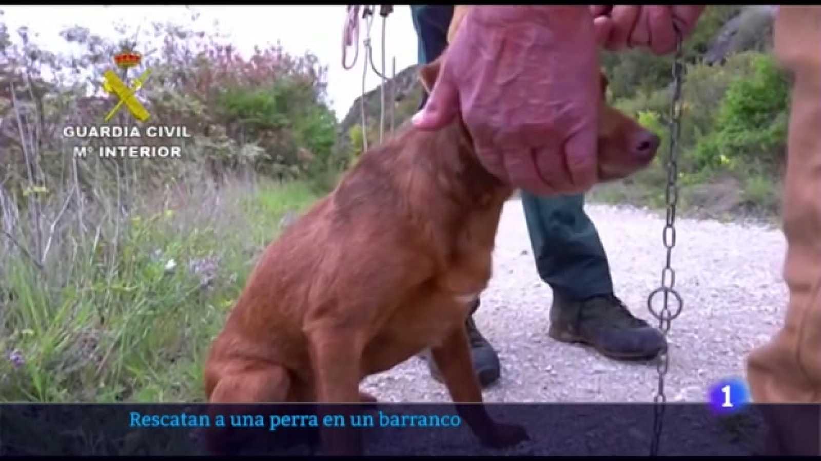 "Rescate perro ""Canela"" por Guardia Civil"