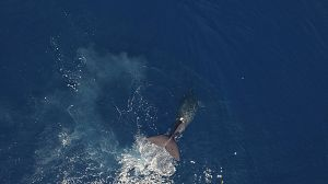 Mamíferos marinos: Campeones de las profundidades