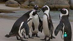 Grans Documentals - L'Àfrica austral - Les costes salvatges