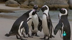 L'Àfrica austral - Les costes salvatges