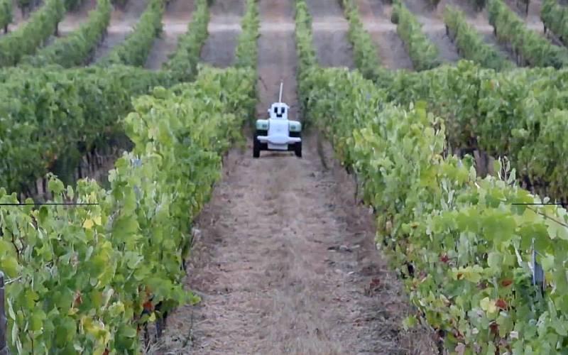 Un robot ayuda a los agricultores a optimizar sus viñedos