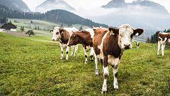 Si las vacas viven felices, tendremos una leche de mejor calidad