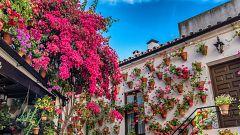 Los patios de Córdoba dan la bienvenida a la primavera con un espectáculo floral único