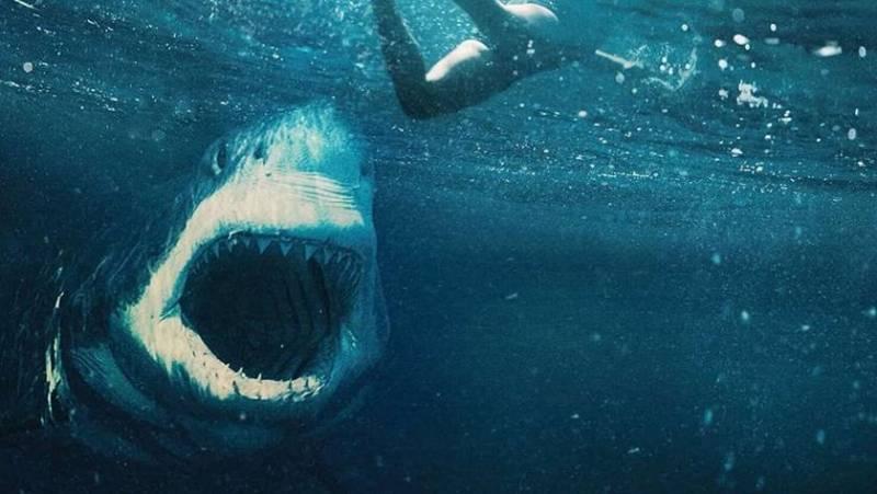 'Tiburón blanco'