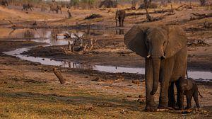 Elefantes, los reyes del Kalahari
