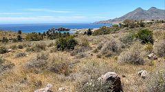 El desierto que florece dos semanas al año se oculta en el Parque Natural del Cabo de Gata