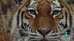 Grans Documentals - Els edens salvatges de Rússia