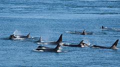 A la búsqueda de los cetáceos en el Estrecho de Gibraltar