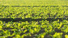 La preocupación por la salud y el medioambiente trae consigo el auge de los productos de proximidad