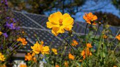 Apiario solar: un nuevo modelo agro voltaico en el que conviven panales de abejas y paneles
