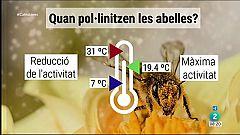 El Temps - Com afecta la temperatura en les abelles?
