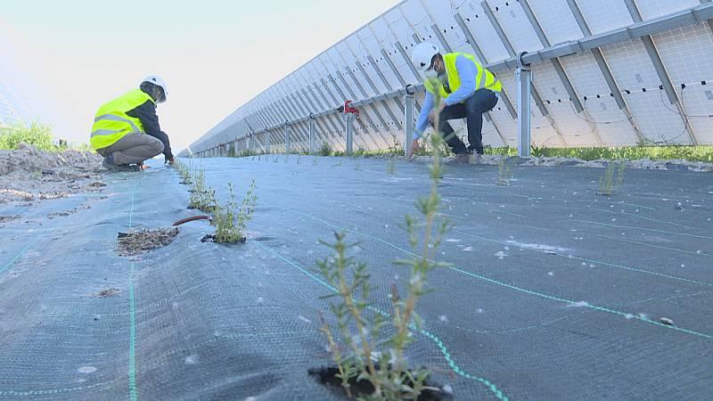 La agrivoltaica es una iniciativa para aprovechar el suelo de las placas solares para cultivo
