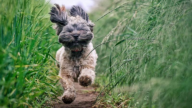 Aquí la Tierra - ¡Botiquín natural para tu mascota! Así es la medicina natural para nuestros peludos