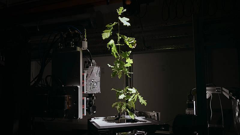 Somos documentales - La genialidad de los árboles - ver ahora